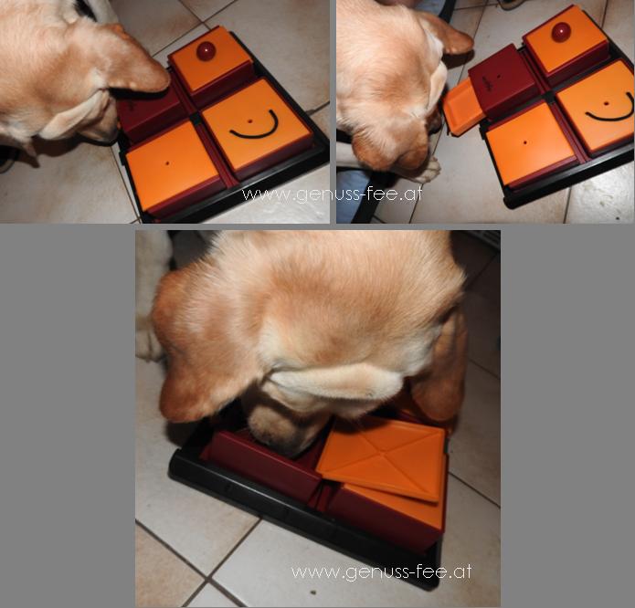 Trixie Poker Box 3